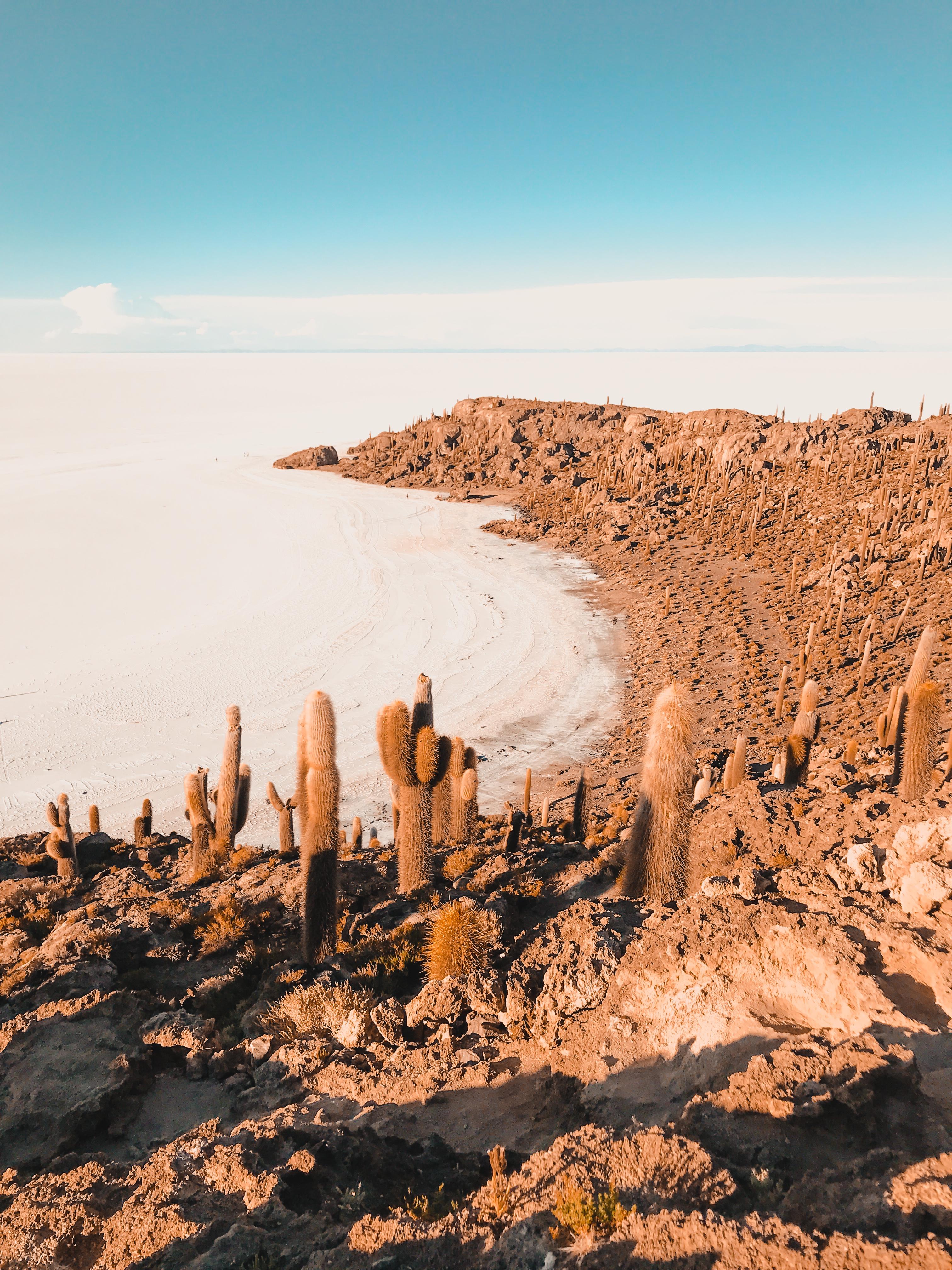 Cactus island in Uyuni