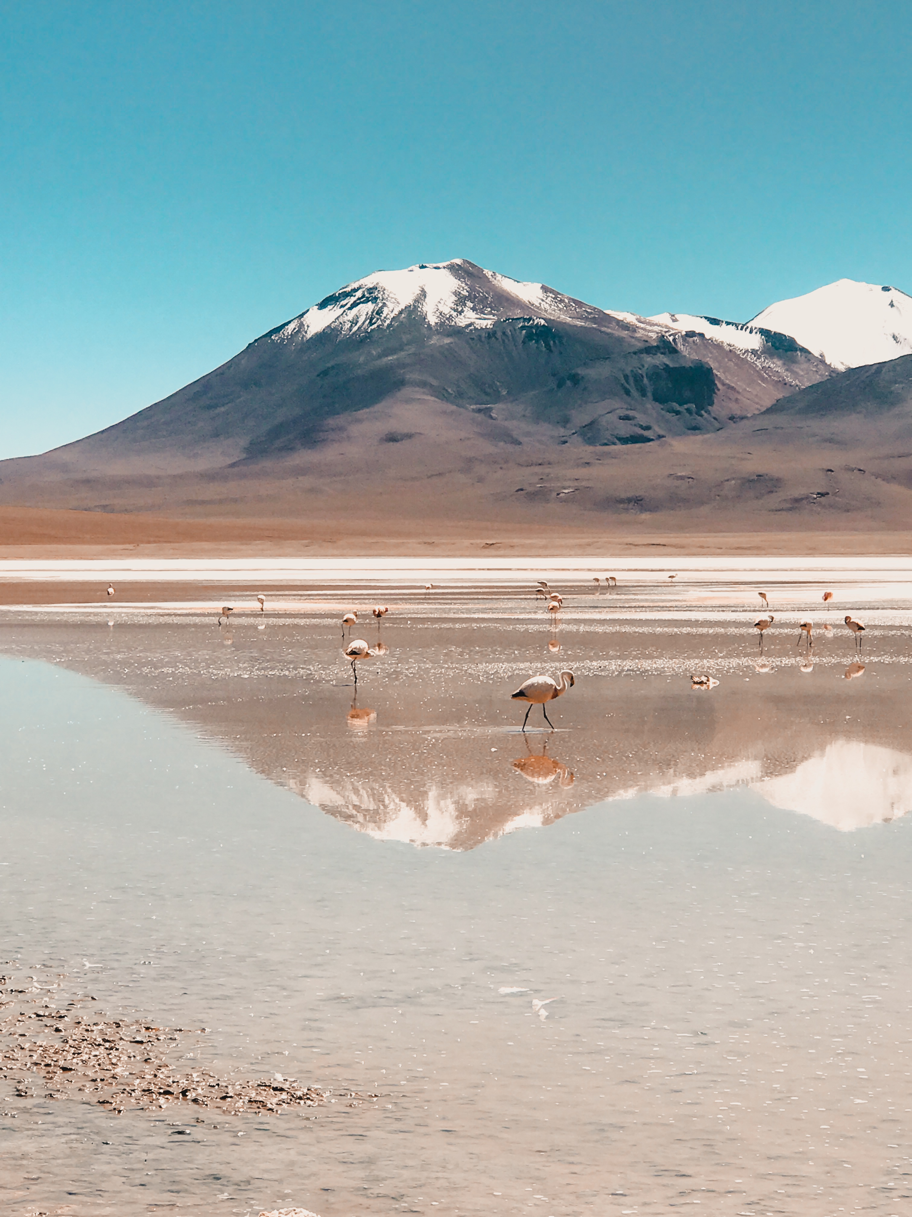Reflection of flamingos in lake in Bolivian desert